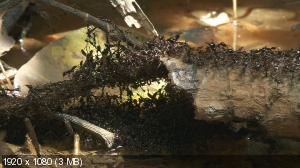 Осажденная крепость 3D / La Citadelle assiegee (2006) Blu-ray + BDRemux + BDRip 720p + BDRip