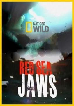 """""""Челюсти"""" Красного моря / Red Sea Jaws (2011) HDTVRip 720p"""
