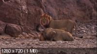 Львы пустыни / Desert Lions (2010) BD Remux + BDRip 720p