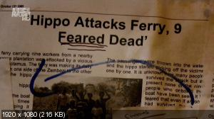 Гиппопотамы-убийцы / Beast Lands.Killer Hippos (2010) HDTV 1080i