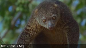 Дикая Азия: Магия Острова / Wild Asia: Island Magic (2009) Blu-ray 1080i + BDRip 1080p + 720p