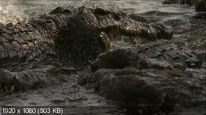 ������� ����������� ������ / Rift Valley / Great Rift - Der grosse Graben (2009) BDRip 1080p + 720p