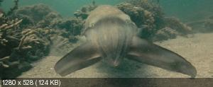 Океаны / Oceans (2009) BDRemux + BDRip 1080p/720p + HDRip